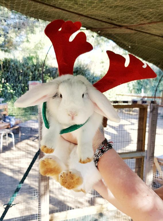 Blanche la lapine