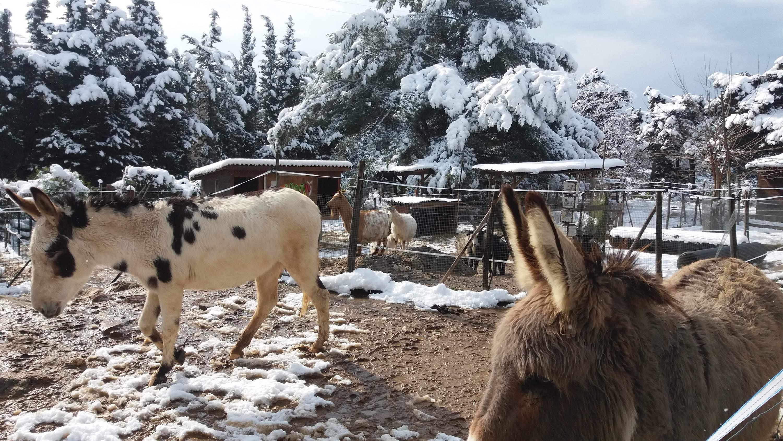 Animaux sous la neige